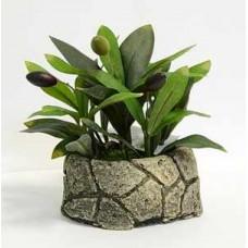 Цветок ДЕКОРАТИВНЫЙ в горшке 16-0002 Олива в каменном горшке