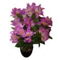 Цветок ДЕКОРАТИВНЫЙ в горшке 16-0113 азалия фиолетовая